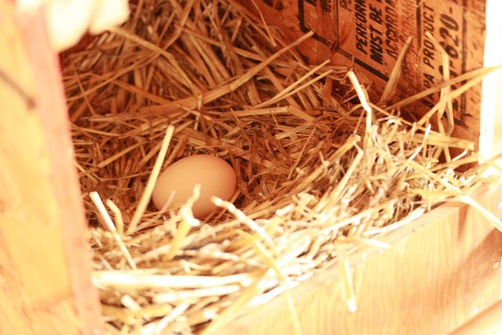 eggbarn